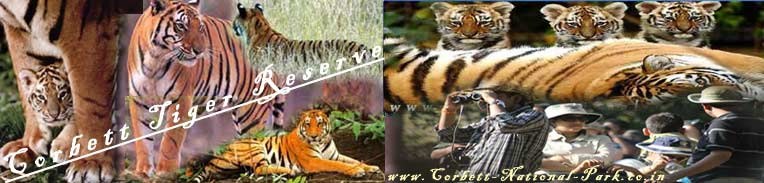Corbett National Park Timings