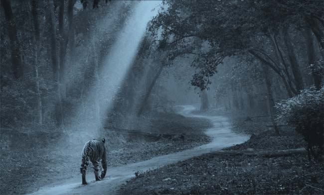 Corbett National Park - Tiger Photo Gallery
