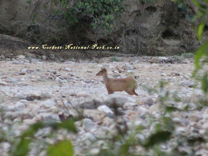 Corbett National Park Photo Gallery