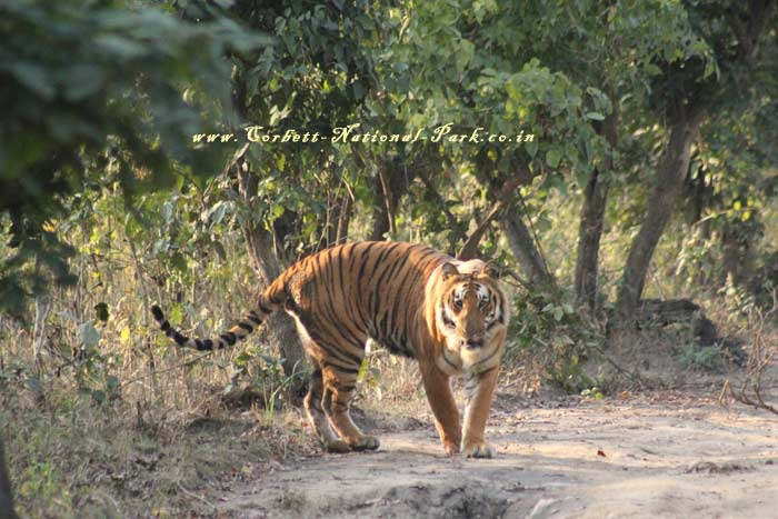 Tiger Tracing Tour - Tiger Tracking Tour