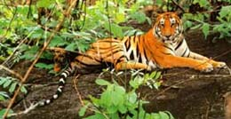 corbett national park tour corbett national park hotels