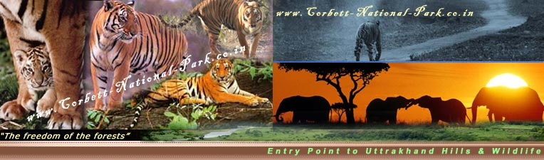 Corbett National Park Nainital Uttarakhand India
