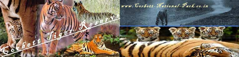 Dhikala A True Jungle Experience...""