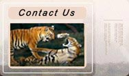 Contact - Corbett National Park