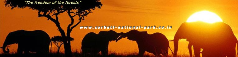 How To Reach Corbett National Park